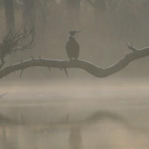 Mist in Oisterwijk