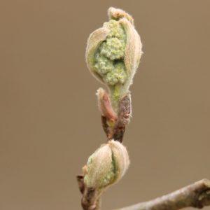 voorjaar in Oisterwijk