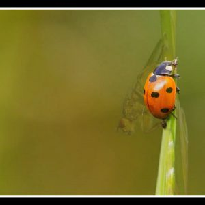kleine insectenwereld